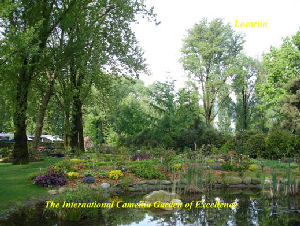 International Camellia Garden of Excellence Locarno